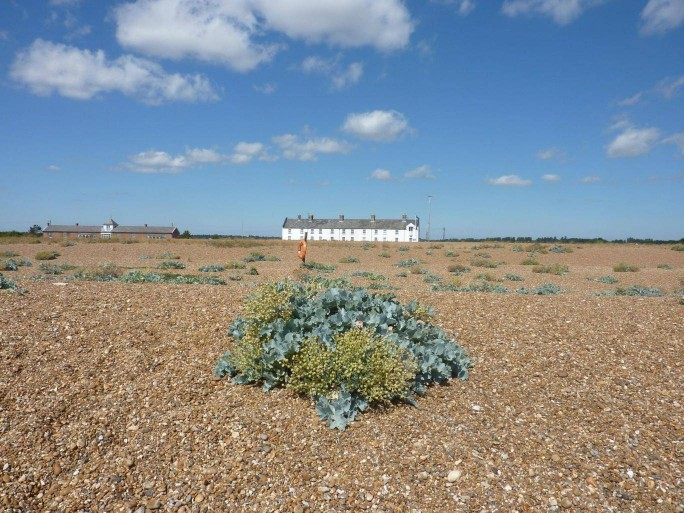 Shingle Street Suffolk Orford - on of the biggest shingle spit in Europe