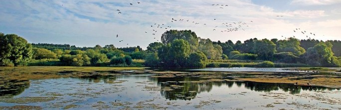 Lackford Lake - Suffolk