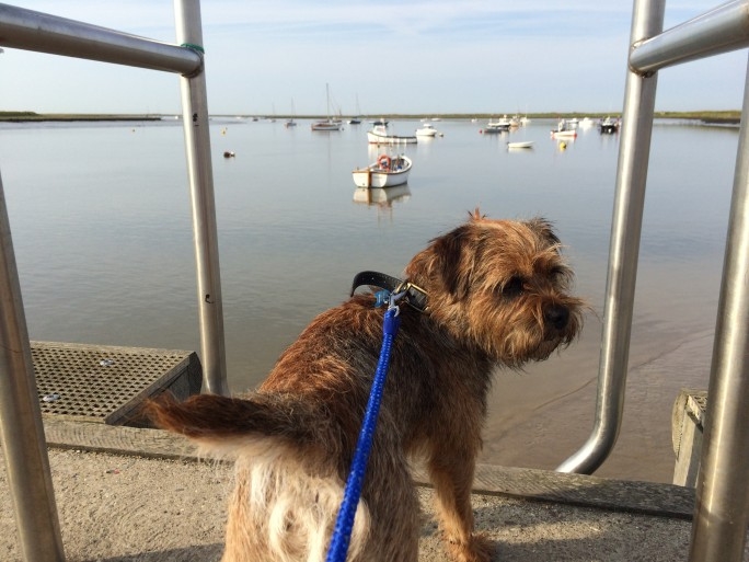 Rusty the Border Terrier on Holiday