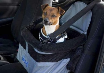 Never miss a trick again with this car seat booster for your dog